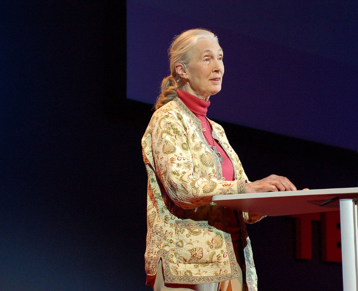Stewards of the Planet: Jane Goodall