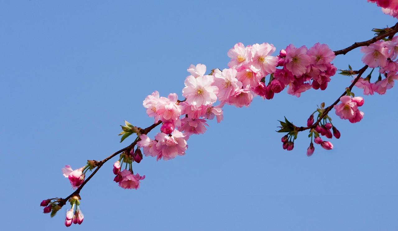 blossom-164330_1280