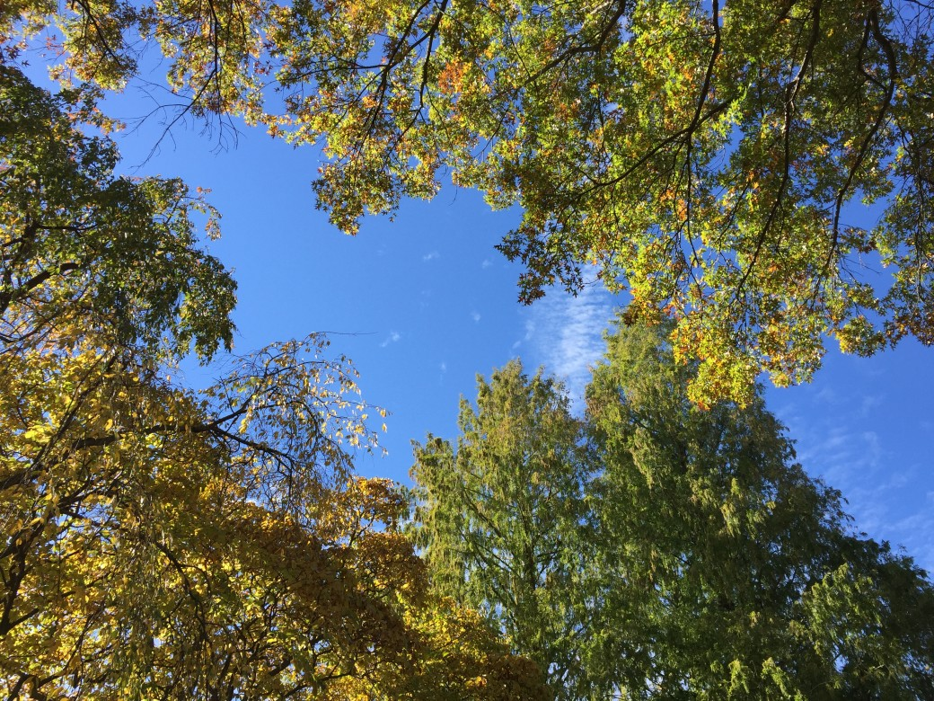 A nature poem - Fall Retreat at Pendle Hill
